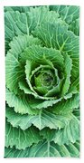 Cabbage Leaves Beach Towel