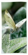 Cabbage White Butterfly In Flight Beach Towel
