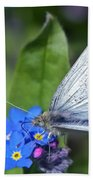 Cabbage White Butterfly On Forget-me-not Beach Towel