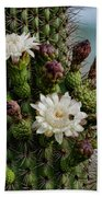Cacti Bouquet  Beach Towel