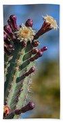 Cactus In Bloom Beach Towel