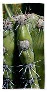 Cactus In Hawaii Beach Towel