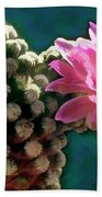 Cactus With Pink Sunlit Bloom Beach Towel