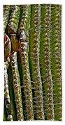 Cactus Wren With Offspring In A Saguaro Cactus In Tucson Sonoran Desert Museum-arizona Beach Towel