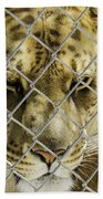 Caged Liger Beach Towel