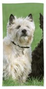 Cairn Terrier And Scottish Terrier Beach Towel