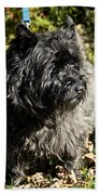 Cairn Terrier Portrait Beach Towel