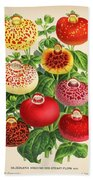 Calceolaria From A Vintage Belgian Book Of Flora. Beach Towel
