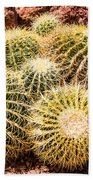 California Barrel Cactus Beach Towel