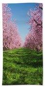 California Peach Tree Orchard  Beach Towel
