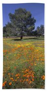 California Poppy And Eriophyllum Beach Towel