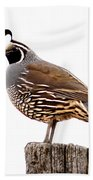 California Quail Beach Towel