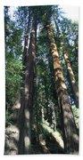 California Redwood Beach Towel