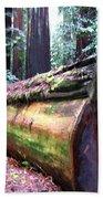 California Redwoods 2 Beach Towel