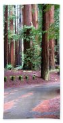 California Redwoods 3 Beach Towel