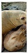 California Sea Lions Beach Towel