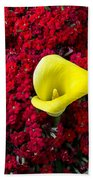 Calla Lily In Red Kalanchoe Beach Towel