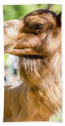 Camel Portrait Beach Towel