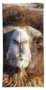 Camel Face Beach Towel