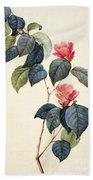 Camellia Japonica Beach Towel by Pierre Joseph Redoute