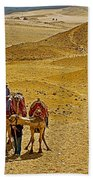 Camels Nuzzling On The Giza Plateau-egypt  Beach Towel