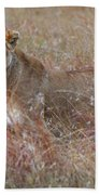 Camouflaged Female Lion In Grass Beach Towel