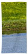 Canada Geese And Goslings Beach Towel