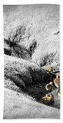 Canada Geese Family Beach Towel