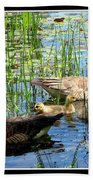 Canada Geese On Lily Pond At Reinstein Woods Beach Towel
