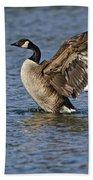 Canada Goose Pictures 165 Beach Towel