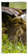 Canada Goose Pictures 189 Beach Towel