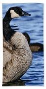 Canada Goose Pictures 84 Beach Towel