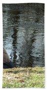 Canadian Geese On Spaulding Pond Beach Towel