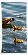 Canadian Goose And Goslings Beach Towel