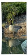 Canadian Goose Reflection Beach Towel