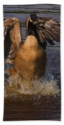 Canadian Goose Smooth Landing Beach Towel
