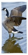 Canadian Goose Stretching Beach Towel