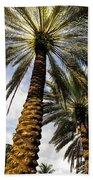 Canary Island Date Palms Beach Towel