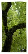 Canopy Of Cedar Elm Beach Towel