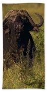 Cape Buffalo   #6851 Beach Towel