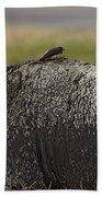 Cape Buffalo And Bird   #9873 Beach Sheet