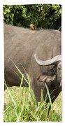 Cape Buffalo  Uganda Beach Towel