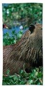Capybara And Jacana Beach Towel