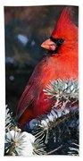 Cardinal And Evergreen Beach Towel