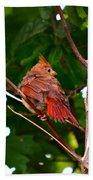 Cardinal Bird Baby Beach Towel