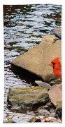 Cardinal By The Creek Beach Towel