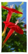Cardinal Climber Flowers Beach Towel