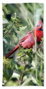 Cardinal In Bush I Beach Towel