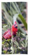 Cardinal In Bush Iv Beach Towel
