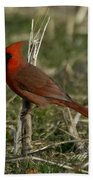 Cardinal In The Field Beach Towel